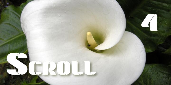 Scroll Banner 1